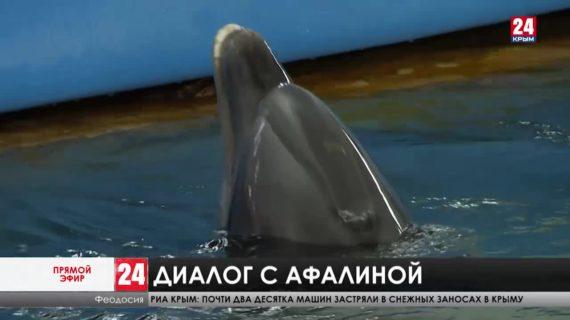 Удастся ли учёным Карадагской научной станции распознать язык дельфинов?