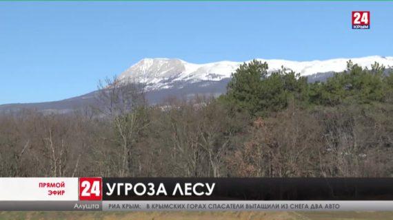 Новости Ялты. Выпуск от 17.02.21