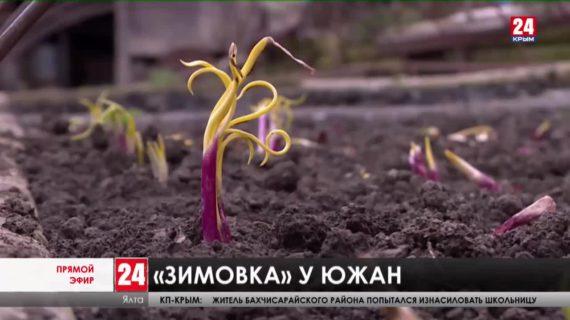 Новости Ялты. Выпуск от 03.02.21