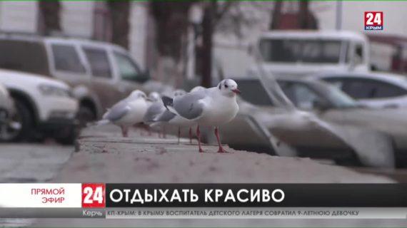 Новости Керчи. Выпуск от 09.02.21