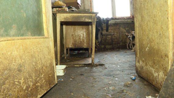 Соседи жалуются на жуткую вонь: Жительница в Красноперекопске держит 30 собак в своей квартире