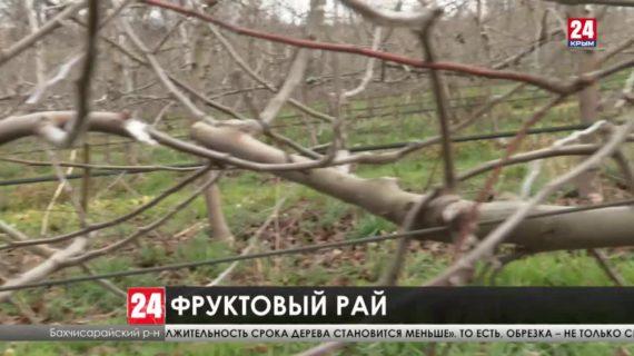 Пять тысяч гектаров садов планируют заложить в Крыму к 2025 году