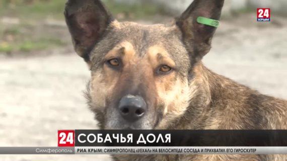 В новый законопроект внесут ответственность за жесткое обращение с животными
