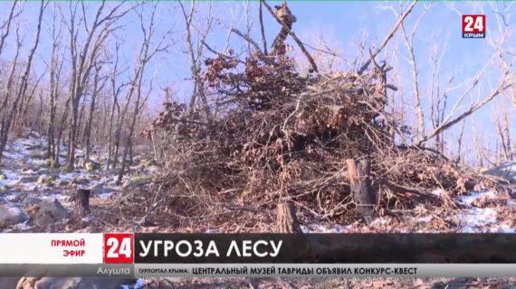 «Черный дровосек». В лесу Алушты уничтожили уникальные деревья. Нашли ли нарушителя?