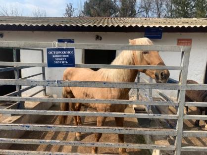 Директор зооуголка, где лошадь откусила палец ребёнку, рассказал о новых мерах безопасности в парке