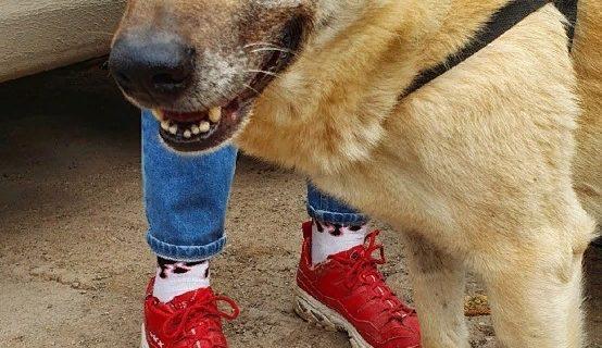Кефир ждёт своего человека: Собака, которую спасал весь Крым, ищет себе дом