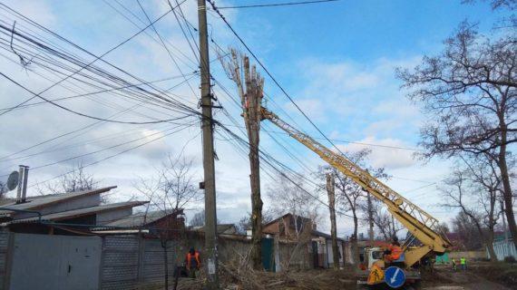 На нескольких улицах Симферополя спилили аварийные деревья
