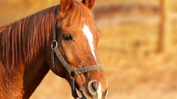 Житель Алушты заплатит штраф в размере 150 тысяч рублей за падение девушки с лошади
