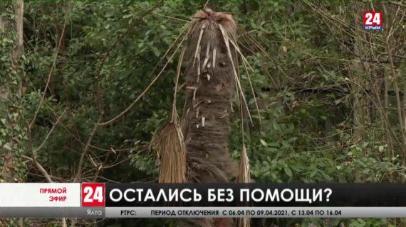 Новости Ялты. Выпуск от 22.03.21