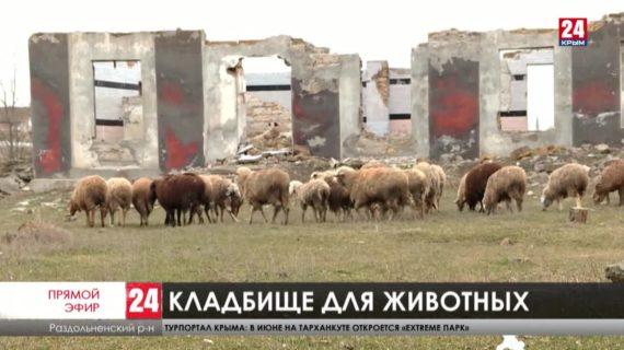 Рога, копыта, черепа. В Раздольненском районе разрастается стихийный скотомогильник. Кто за него в ответе?