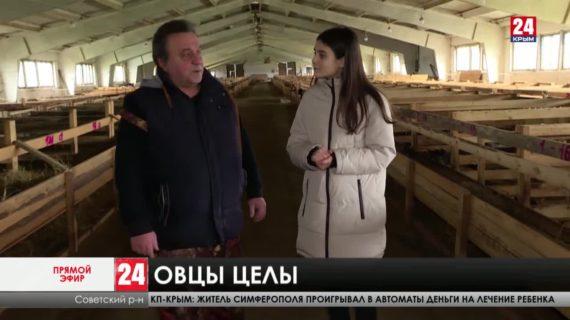 Побить прошлогодний рекорд. Рождение скольких ягнят ожидают в Крыму этой весной?