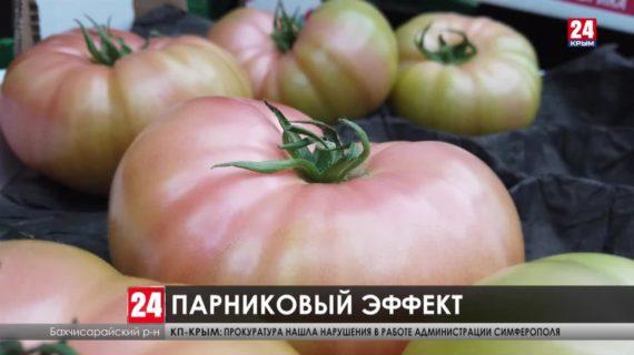 Крымские овощи по голландской технологии. Как развиваются тепличные хозяйства Республики?