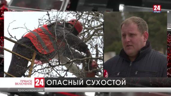 В Красноперекопске коммунальщики приступили к весенним работам в зеленых зонах
