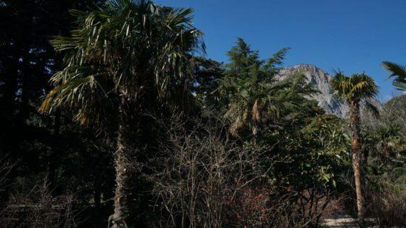 Глава Крыма обяжет застройщиков высаживать по 5 деревьев за каждое вырубленное или повреждённое