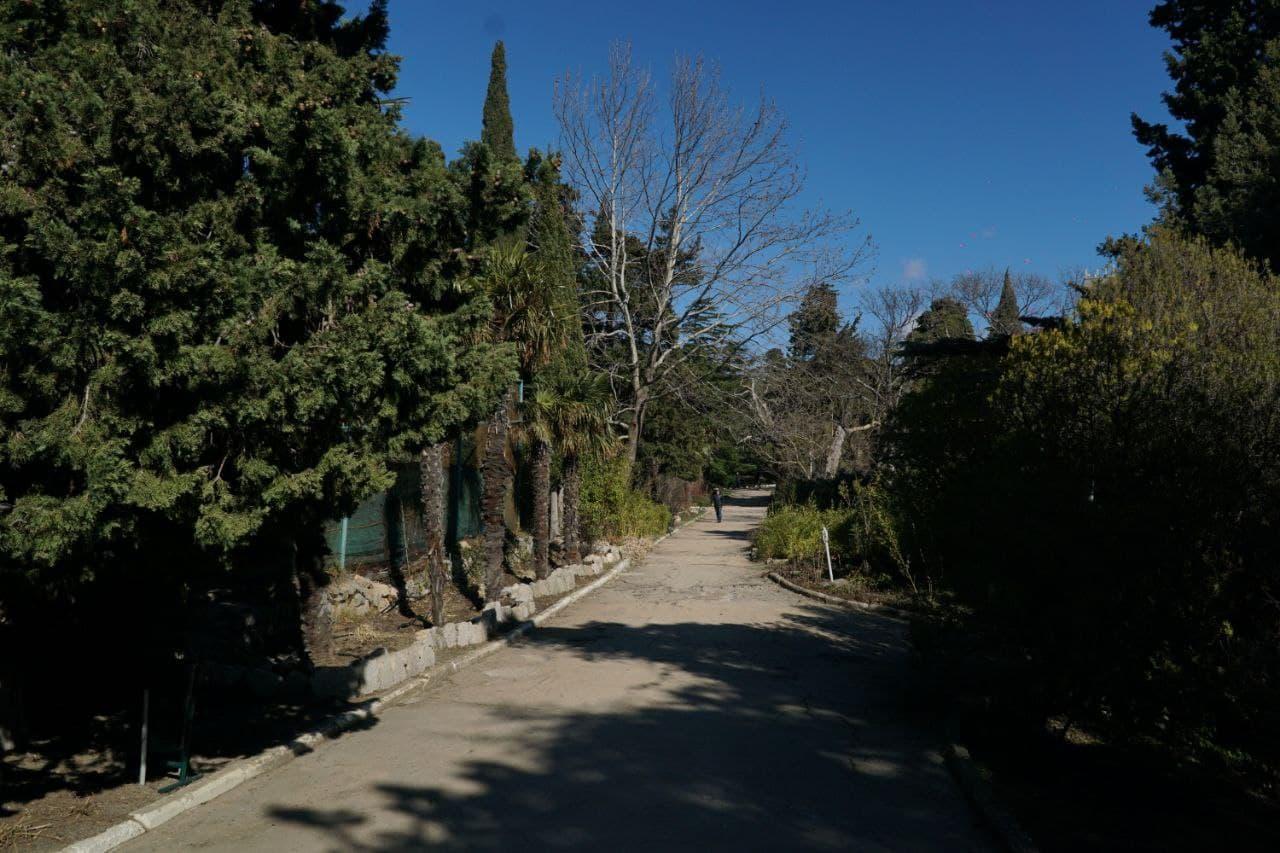 форос форосский парк природа пальмы