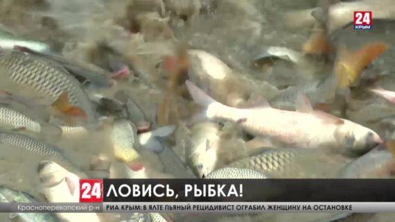Почти 33 миллиона рублей господдержки получили рыбоводы Крыма в прошлом году