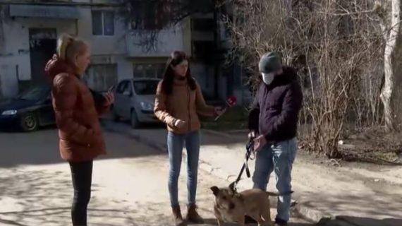 Хозяин стаффа, покусавшего дворнягу Кефира в Симферополе: Дворняги напали на моего пса, я защищал его, как мог
