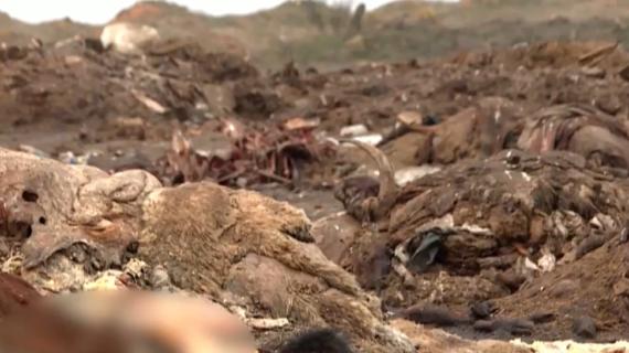Рога, копыта, черепа: В Раздольненском районе разрастается стихийный скотомогильник