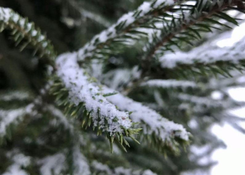 В водохранилищах Ялты не стало больше воды из-за заморозков
