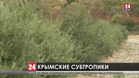 Когда в Крыму появятся экзотические сады? На полуострове планируют производство саженцев субтропических растений