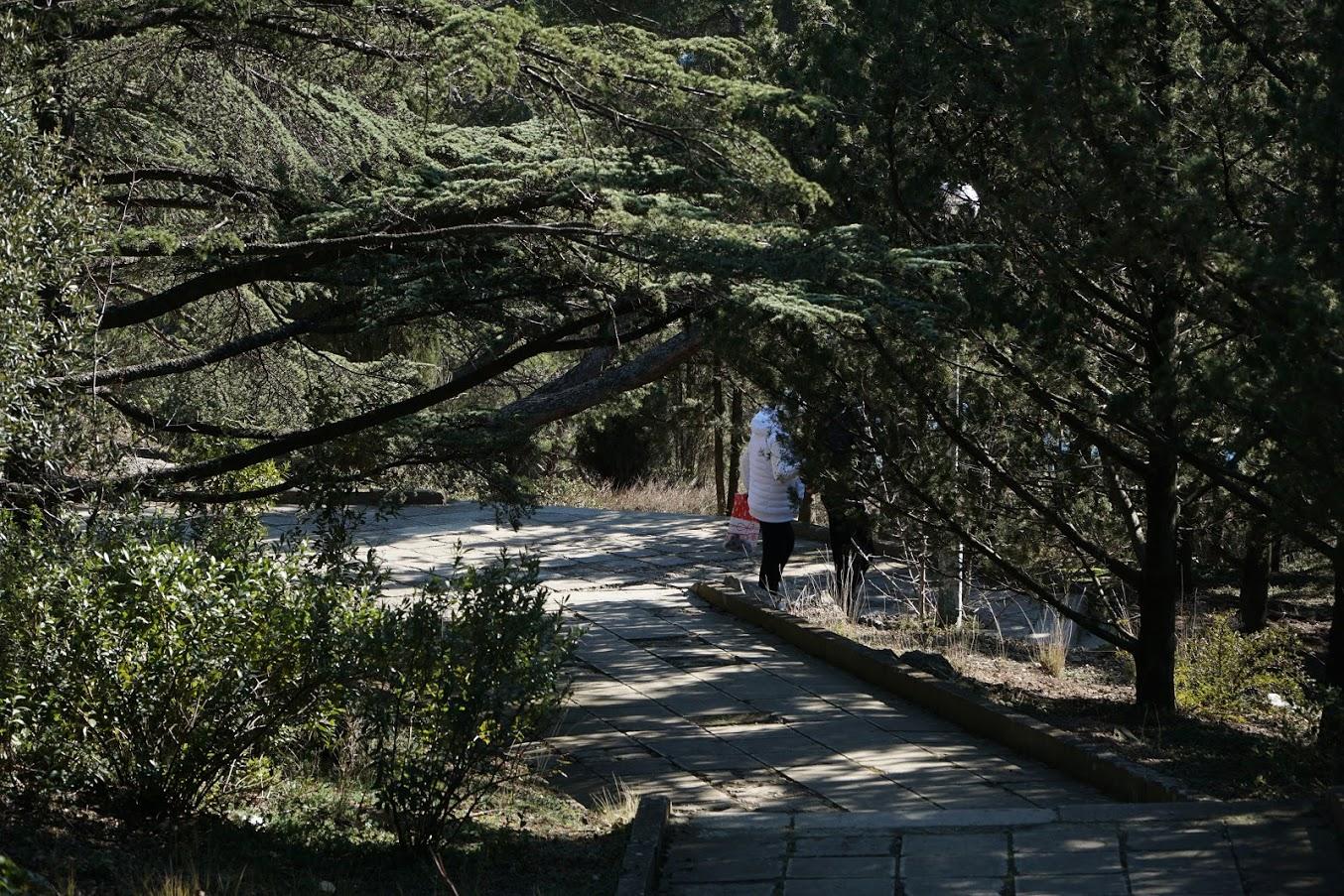 Строители загаживают часть Форосского парка