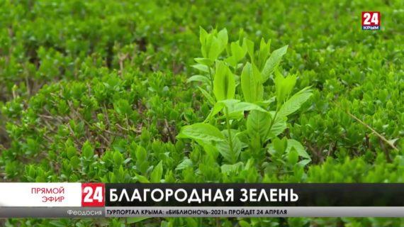 Новости восточного Крыма. Выпуск от 21.04.21