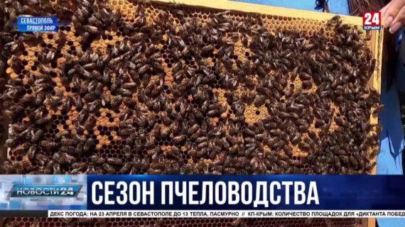 Сезон пчеловодства открыт. Когда ожидать первый сбор меда?