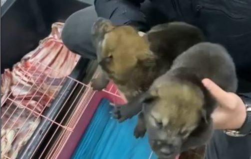 В зоопарке в Бахчисарае родились два волка
