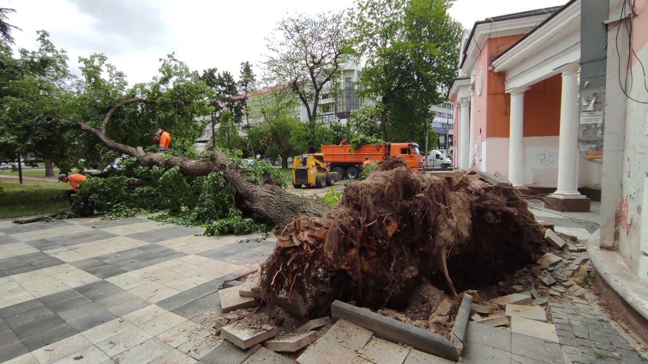В столице Крыма у кинотеатра «Симферополь» рухнуло огромное дерево