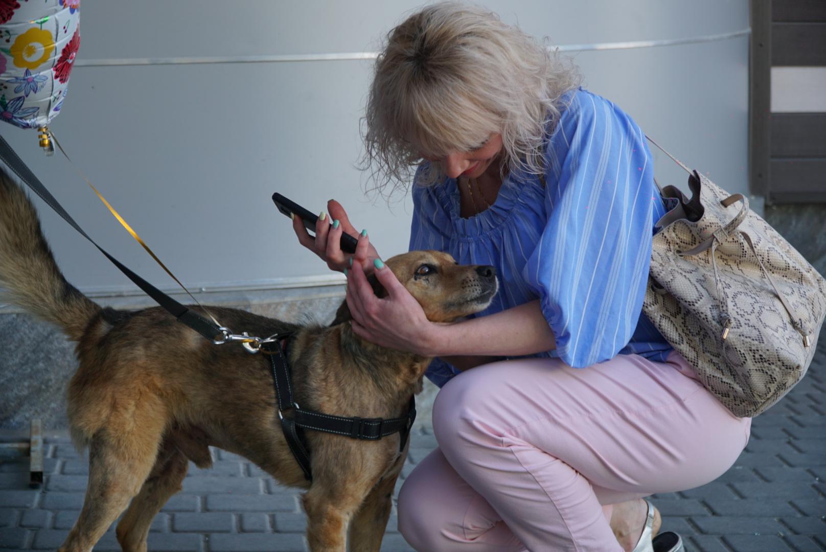 В Симферополе нашли пса Везунчика, который сбежал после выписки из ветклиники
