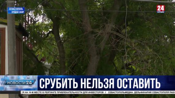 В Севастополе решают судьбу старых деревьев