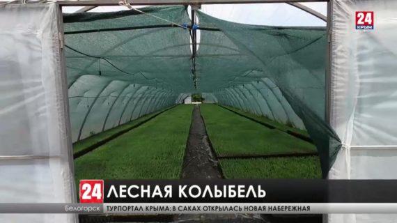 В Крыму начали выращивать деревья в теплицах для восстановления лесов полуострова