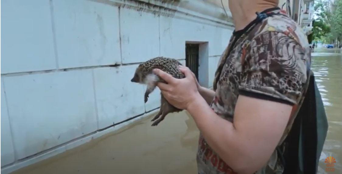 Спасение маленькой жизни: в Керчи во время потопа вытащили из воды ёжика