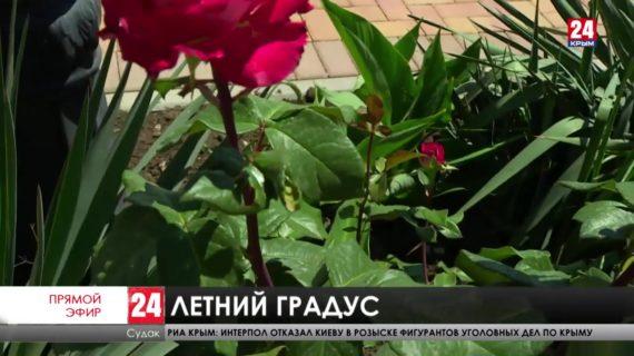 Новости восточного Крыма. Выпуск от 01.06.21