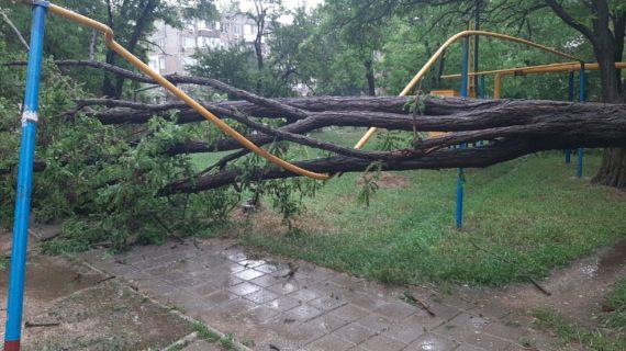 В Керчи из-за сильного ветра дерево упало на газовую трубу