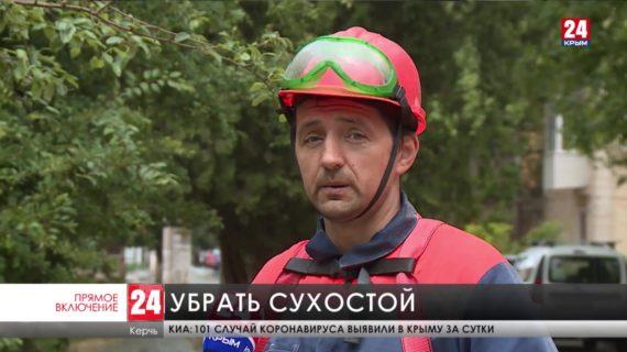 В Керчи обрезают аварийные деревья