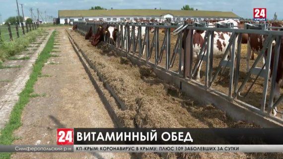 Заготовка кормов для животных в Крыму идёт полным ходом