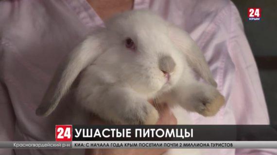 Как развивается кролиководство в Республике?
