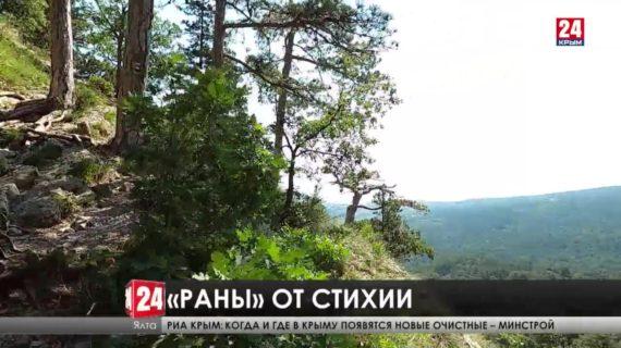 Разрушительная стихия. Туристические тропы Ялты пострадали от схода селей