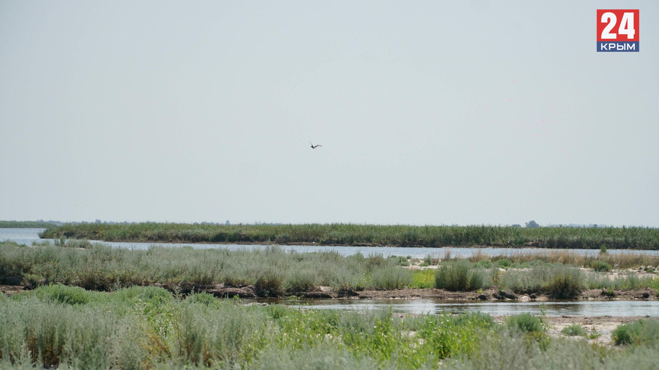 Перекрытие Северо-Крымского канала изменило экологическую ситуацию на Лебяжьих островах