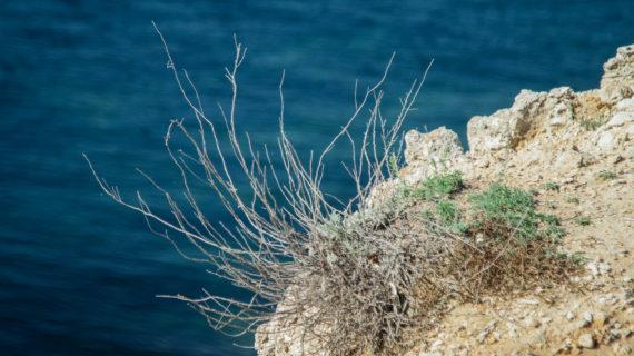 В Севастополе погиб турист после прыжка со скалы в море