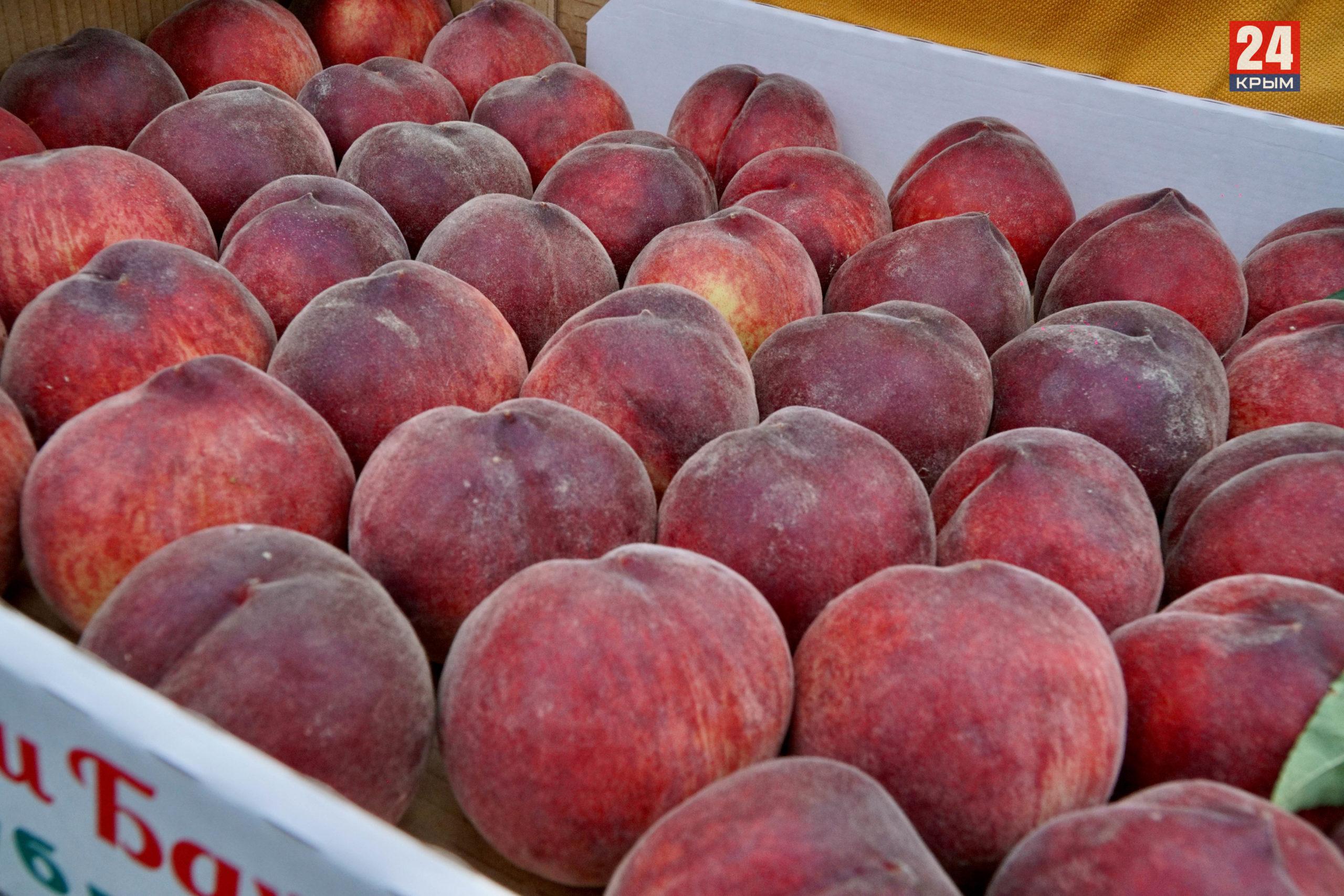 В Крыму началась уборка персиков. Фоторепортаж