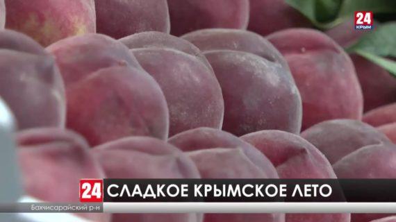 В Крыму стартовала уборка урожая персиков. В планах – снять около 2 тысяч тонн сладких плодов. Как развивается отрасль?