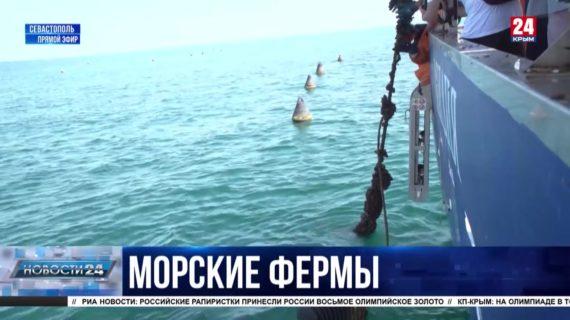 В Севастополе за год вдвое увеличили объем производства мидий