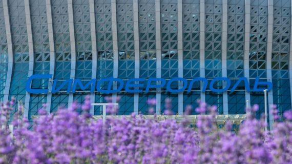 В аэропорту Симферополь расцвело более 19 тысяч кустов лаванды