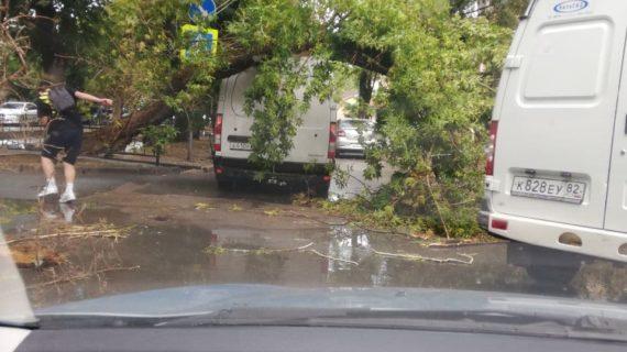 В Симферополе большое дерево рухнуло на машину