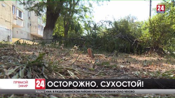 Где в Керчи больше всего аварийных деревьев?