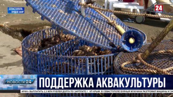 Как развивают морское фермерство в Севастополе?