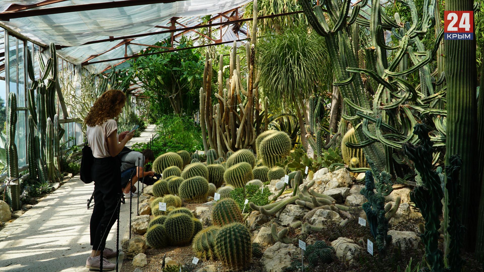Самый колючий уголок Крыма: кактусовой оранжерее исполнилось 25 лет