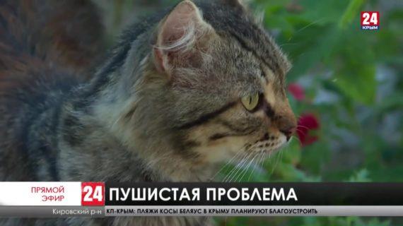 Мы в ответе за тех, кого приручили? В посёлке Кировское мужчина завел 18 кошек и поссорился с соседями